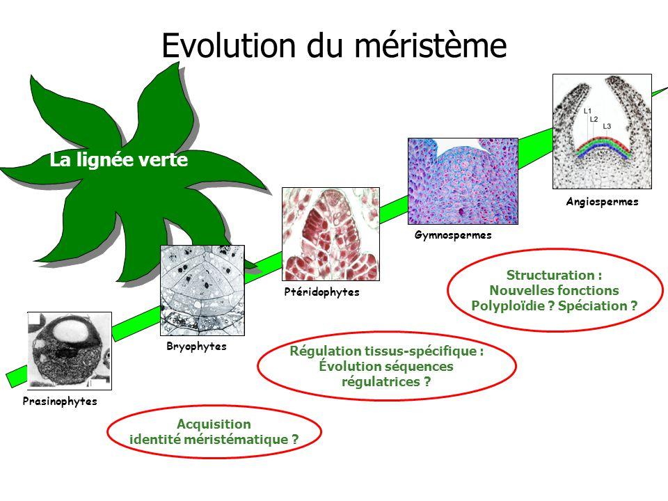 Régulation tissus-spécifique : Évolution séquences régulatrices .