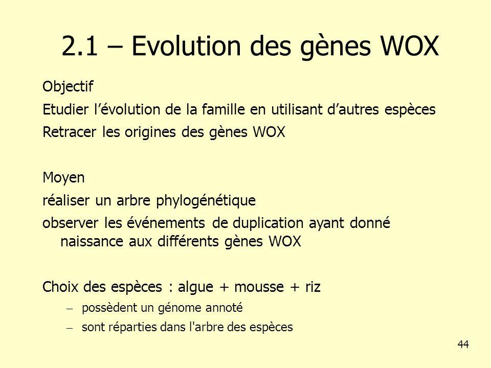 2.1 – Evolution des gènes WOX Objectif Etudier lévolution de la famille en utilisant dautres espèces Retracer les origines des gènes WOX Moyen réaliser un arbre phylogénétique observer les événements de duplication ayant donné naissance aux différents gènes WOX Choix des espèces : algue + mousse + riz – possèdent un génome annoté – sont réparties dans l arbre des espèces 44