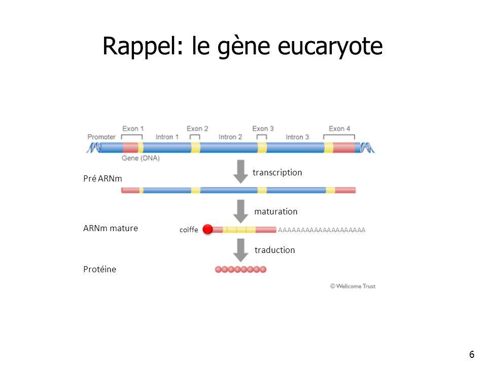 Rappel: le gène eucaryote 6 transcription maturation traduction coiffe ARNm mature Pré ARNm Protéine AAAAAAAAAAAAAAAAAAAA