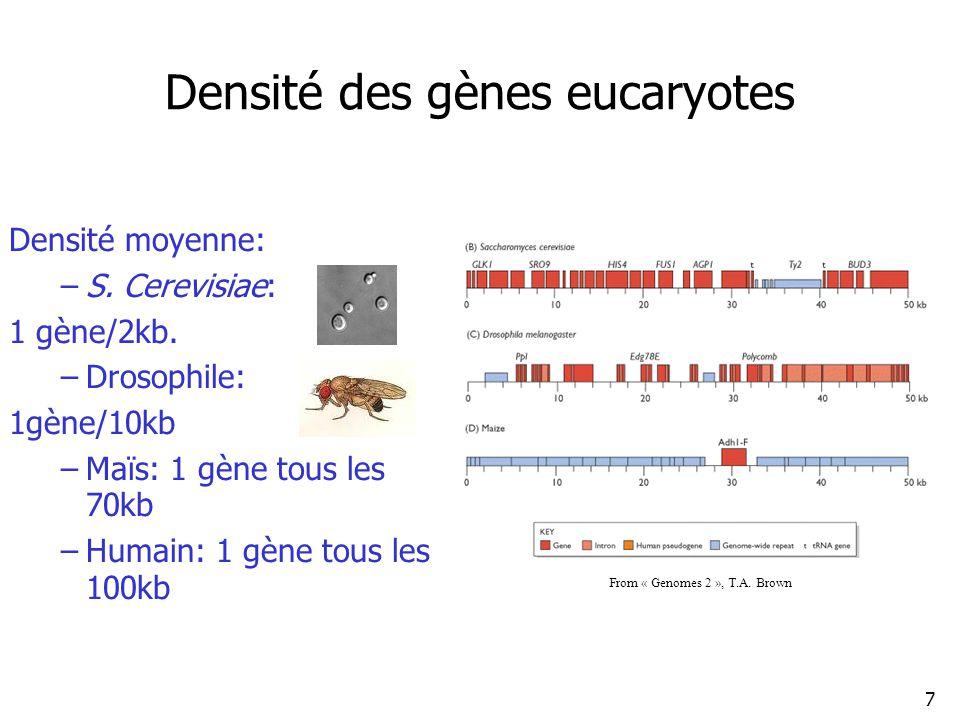 7 Densité des gènes eucaryotes Densité moyenne: –S.