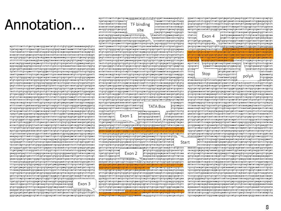 Processus en deux phases : Apprentissage : rassembler des gènes bien documentés, en extraire les données informatives et entraîner les algorithmes à les reconnaître individuellement Prédiction : chaque algorithme élémentaire reconnaît une caractéristique, et la combinaison des éléments prédits conduit à la prédiction globale des gènes Limite de lusage du code : il nest pas uniforme.
