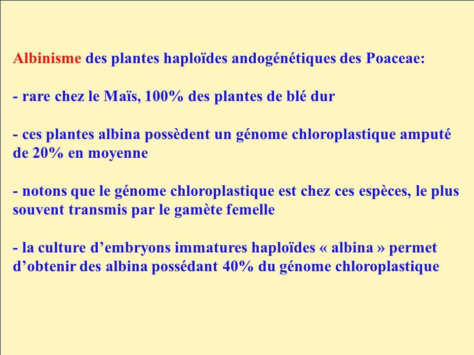 Albinisme des plantes haploïdes andogénétiques des Poaceae: - rare chez le Maïs, 100% des plantes de blé dur - ces plantes albina possèdent un génome