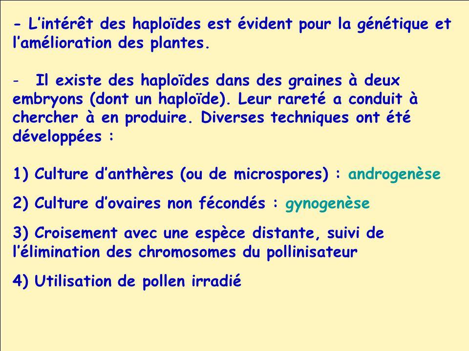 - Lintérêt des haploïdes est évident pour la génétique et lamélioration des plantes. -Il existe des haploïdes dans des graines à deux embryons (dont u
