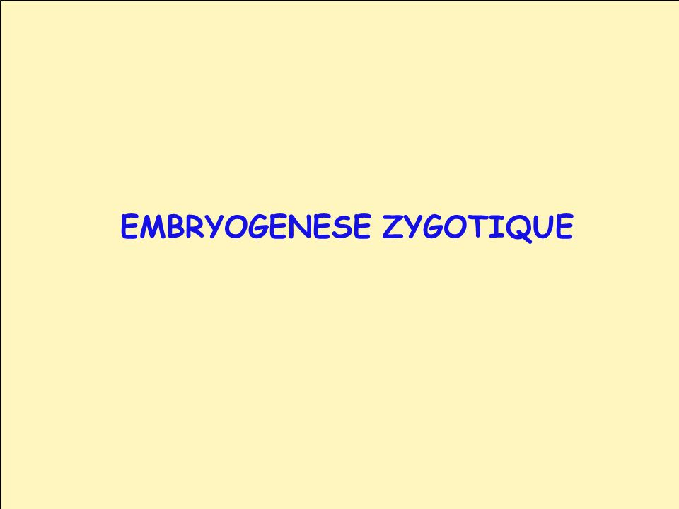 EMBRYOGENESE ZYGOTIQUE
