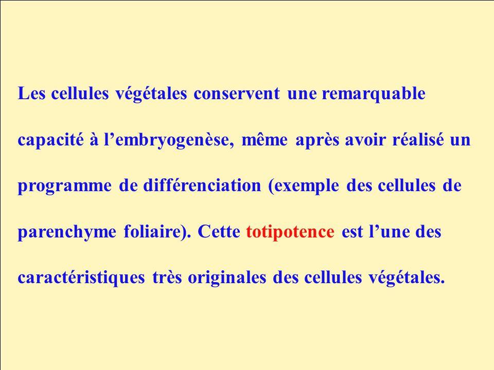 Les cellules végétales conservent une remarquable capacité à lembryogenèse, même après avoir réalisé un programme de différenciation (exemple des cell