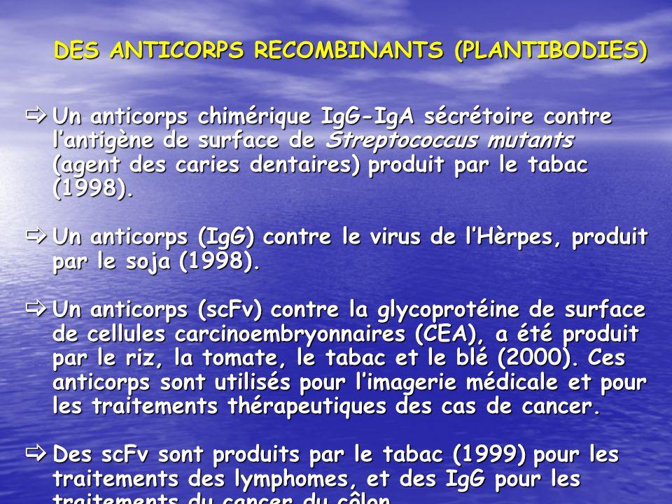 DES ANTICORPS RECOMBINANTS (PLANTIBODIES) Un anticorps chimérique IgG-IgA sécrétoire contre lantigène de surface de Streptococcus mutants (agent des c