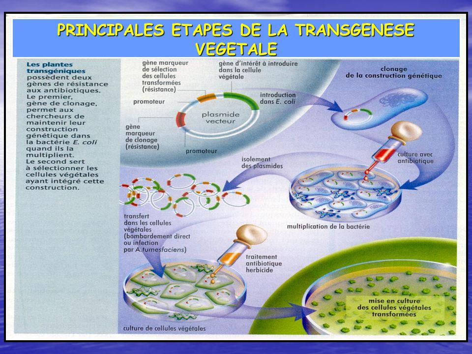 PRINCIPALES ETAPES DE LA TRANSGENESE VEGETALE