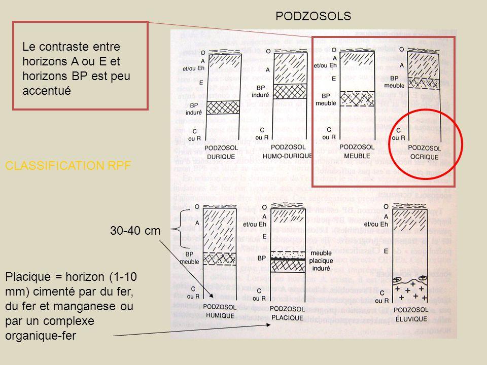 30-40 cm Placique = horizon (1-10 mm) cimenté par du fer, du fer et manganese ou par un complexe organique-fer Le contraste entre horizons A ou E et h