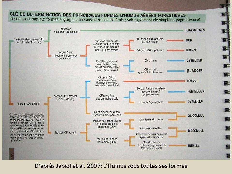 Daprès Jabiol et al. 2007: LHumus sous toutes ses formes