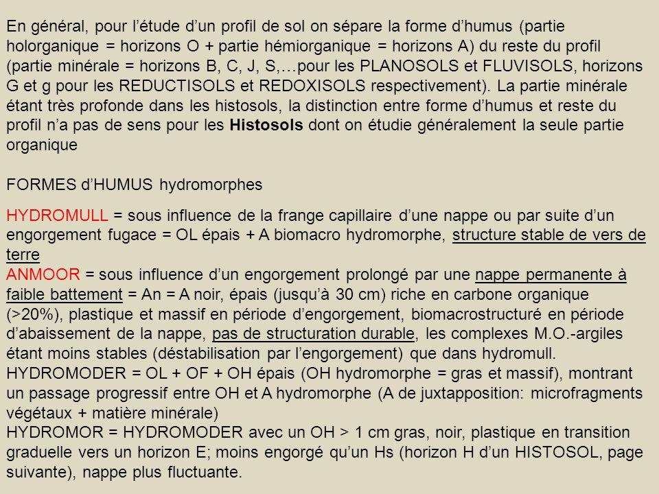 En général, pour létude dun profil de sol on sépare la forme dhumus (partie holorganique = horizons O + partie hémiorganique = horizons A) du reste du
