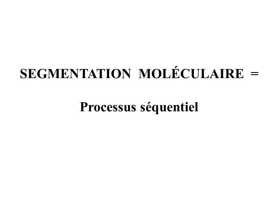 SEGMENTATION MOLÉCULAIRE = Processus séquentiel