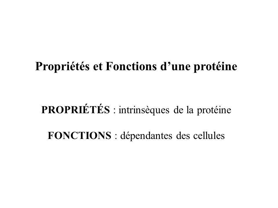 Propriétés et Fonctions dune protéine PROPRIÉTÉS : intrinsèques de la protéine FONCTIONS : dépendantes des cellules