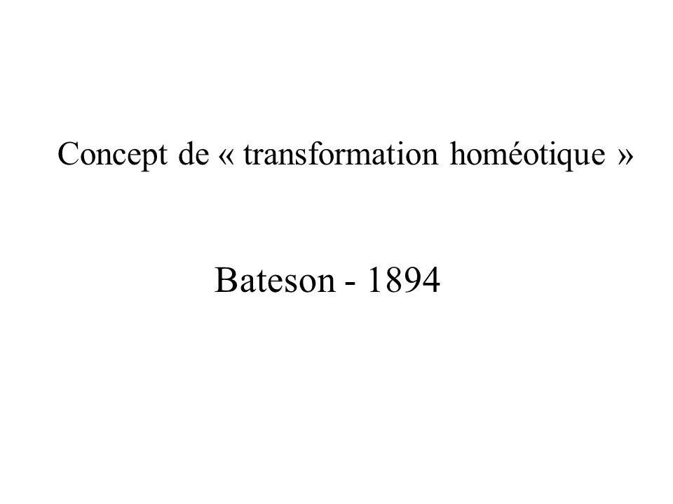 Concept de « transformation homéotique » Bateson - 1894