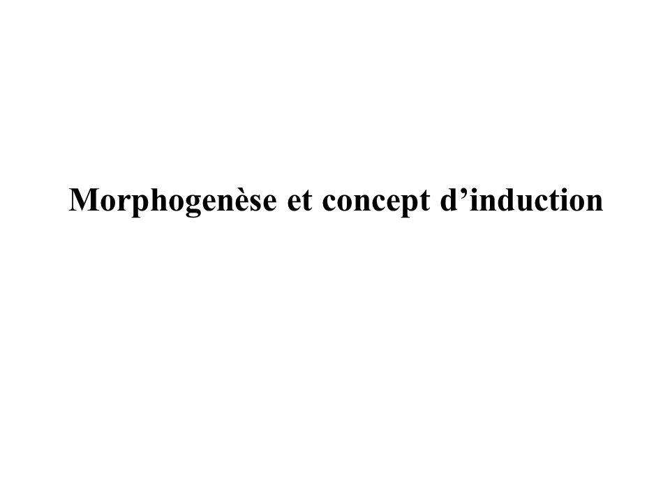 Morphogenèse et concept dinduction