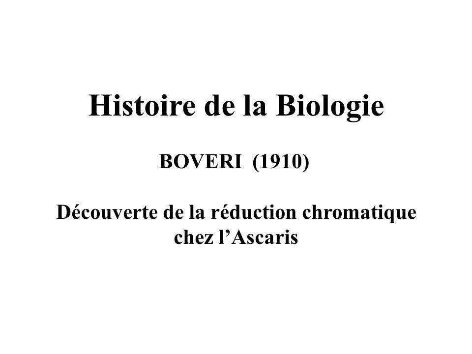 Histoire de la Biologie BOVERI (1910) Découverte de la réduction chromatique chez lAscaris