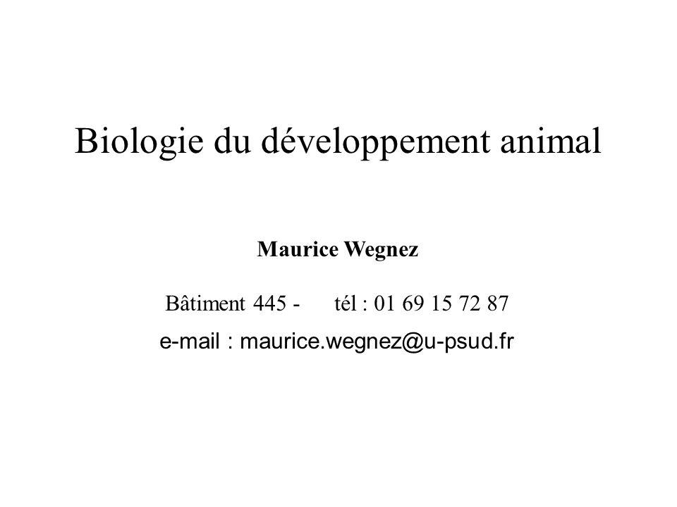 Biologie du développement animal Maurice Wegnez Bâtiment 445 - tél : 01 69 15 72 87 e-mail : maurice.wegnez@u-psud.fr