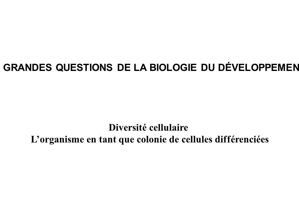 GRANDES QUESTIONS DE LA BIOLOGIE DU DÉVELOPPEMENT Diversité cellulaire Lorganisme en tant que colonie de cellules différenciées