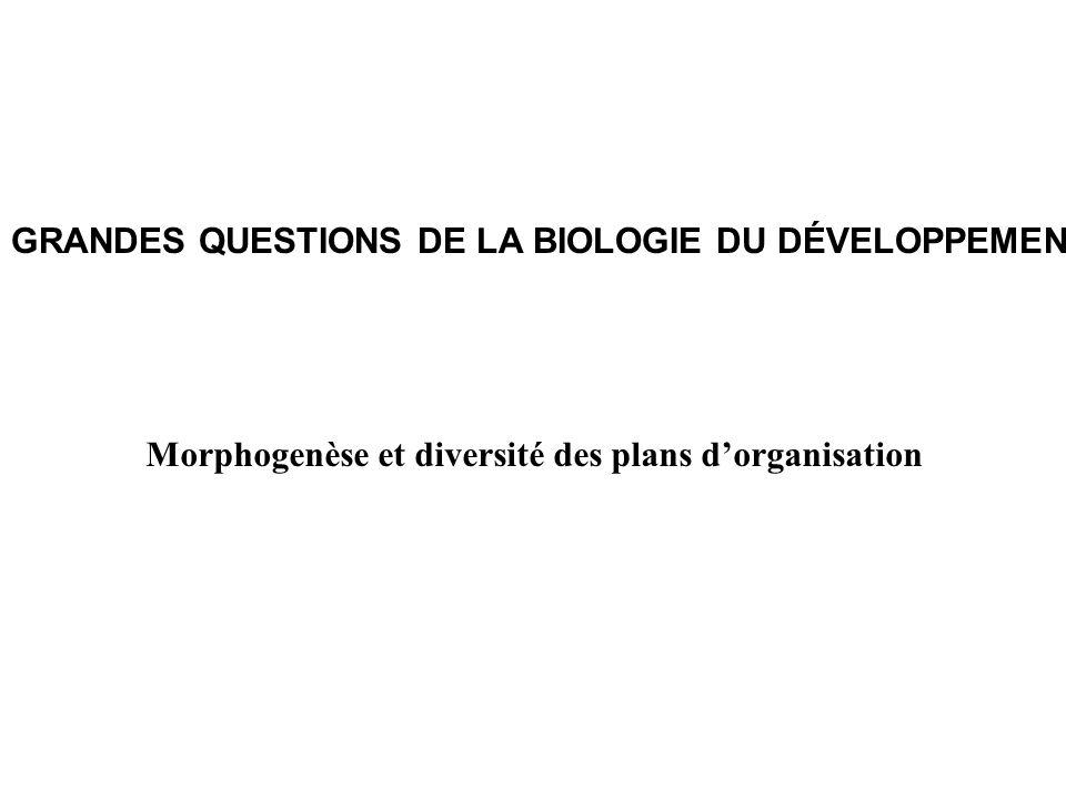 GRANDES QUESTIONS DE LA BIOLOGIE DU DÉVELOPPEMENT Morphogenèse et diversité des plans dorganisation