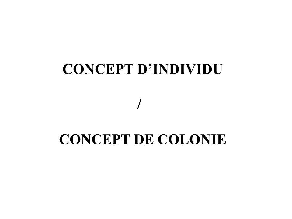 CONCEPT DINDIVIDU / CONCEPT DE COLONIE