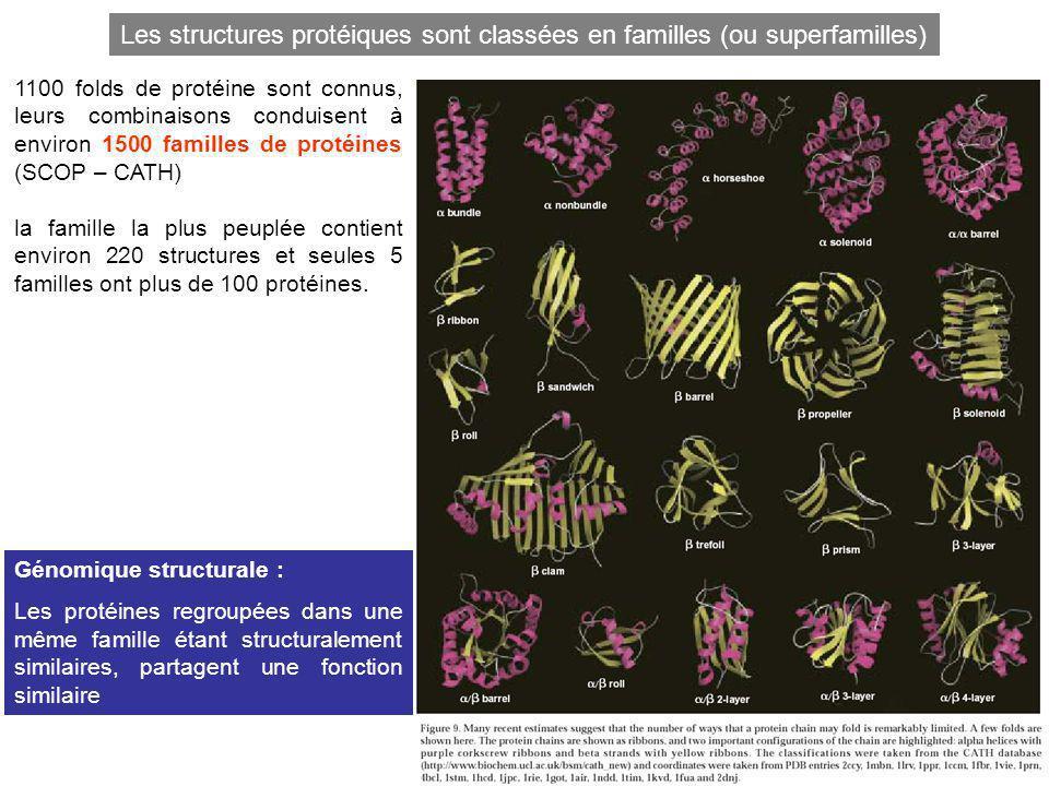 1100 folds de protéine sont connus, leurs combinaisons conduisent à environ 1500 familles de protéines (SCOP – CATH) la famille la plus peuplée contie