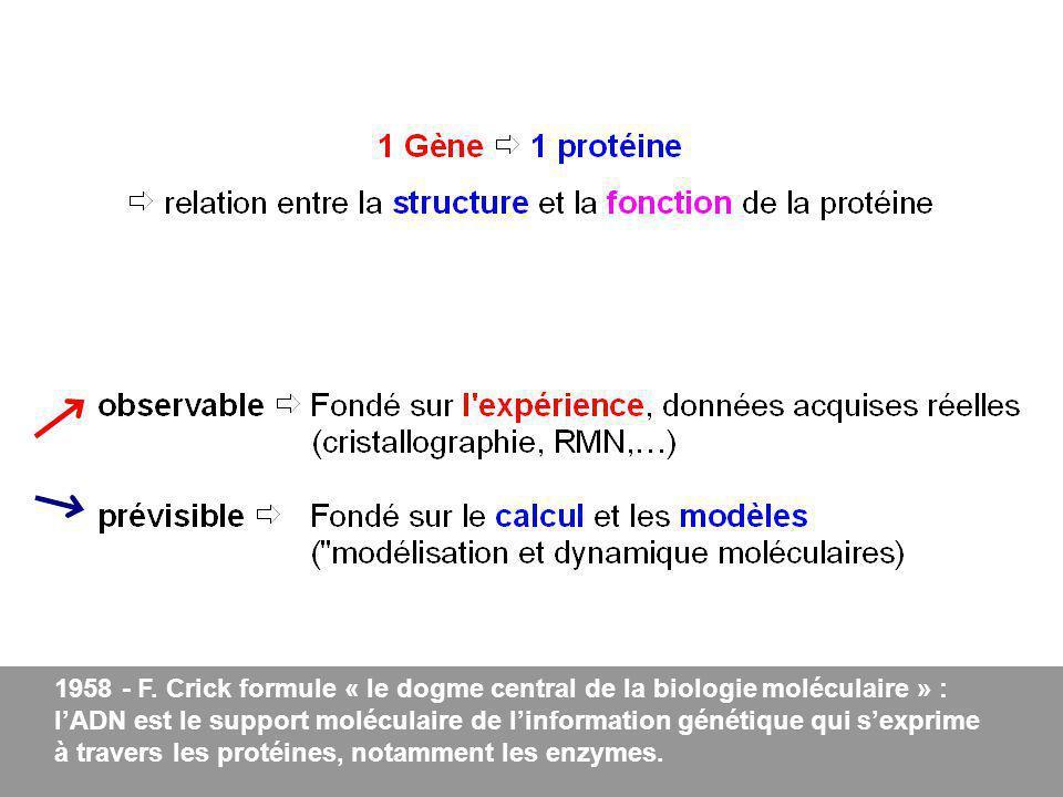 1958 - F. Crick formule « le dogme central de la biologie moléculaire » : lADN est le support moléculaire de linformation génétique qui sexprime à tra