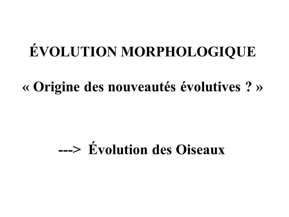 ÉVOLUTION MORPHOLOGIQUE « Origine des nouveautés évolutives ? » ---> Évolution des Oiseaux