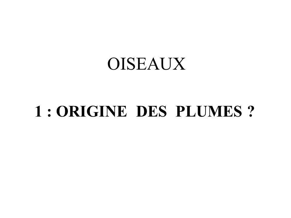 1 : ORIGINE DES PLUMES ? OISEAUX