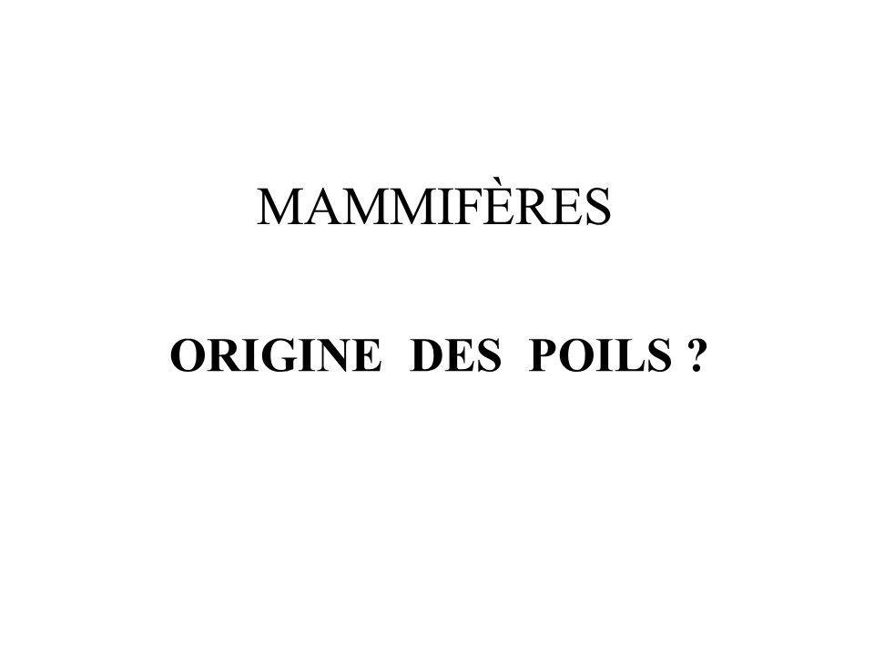 ORIGINE DES POILS ? MAMMIFÈRES