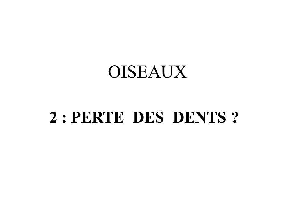 2 : PERTE DES DENTS ? OISEAUX