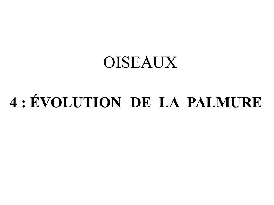 4 : ÉVOLUTION DE LA PALMURE OISEAUX