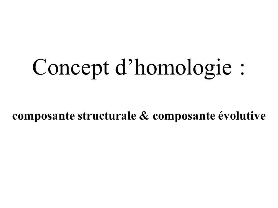 Concept dhomologie : composante structurale & composante évolutive