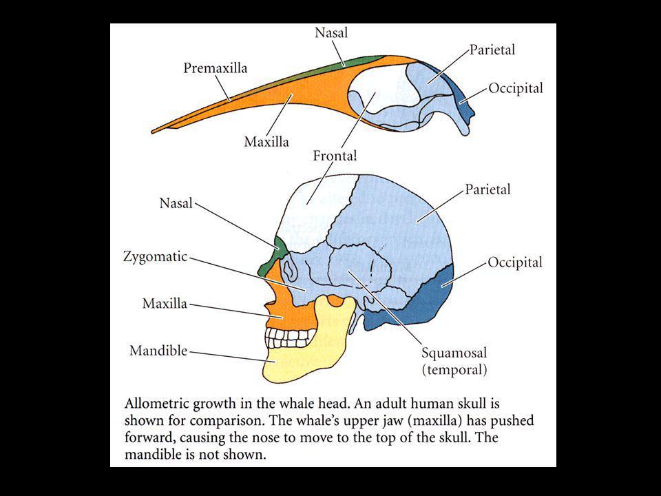 Têtes de drosophiles