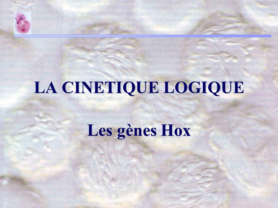 LA CINETIQUE LOGIQUE Les gènes Hox