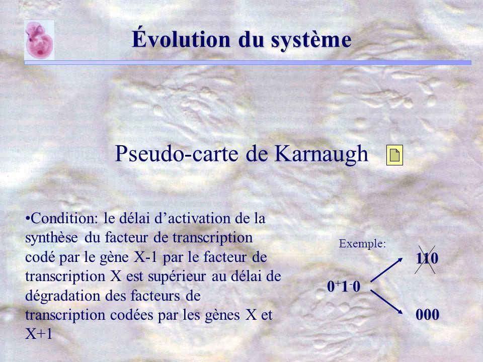 Évolution du système Condition: le délai dactivation de la synthèse du facteur de transcription codé par le gène X-1 par le facteur de transcription X est supérieur au délai de dégradation des facteurs de transcription codées par les gènes X et X+1 Pseudo-carte de Karnaugh Exemple: 0+1-00+1-00+1-00+1-0 110 000