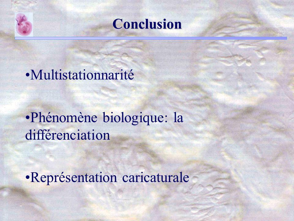 Conclusion Multistationnarité Phénomène biologique: la différenciation Représentation caricaturale