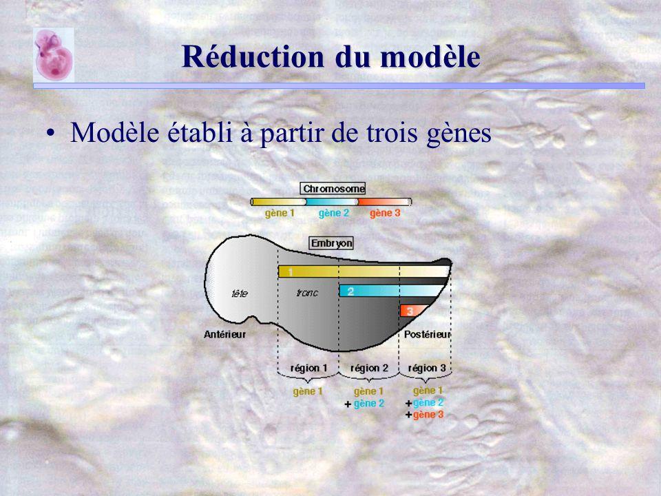 Réduction du modèle Modèle établi à partir de trois gènes