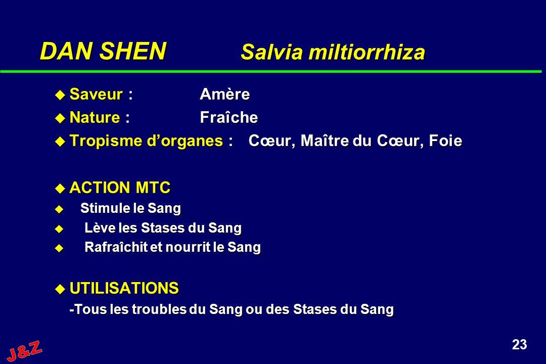 23 DAN SHEN Salvia miltiorrhiza Saveur :Amère Saveur :Amère Nature :Fraîche Nature :Fraîche Tropisme dorganes :Cœur, Maître du Cœur, Foie Tropisme dor