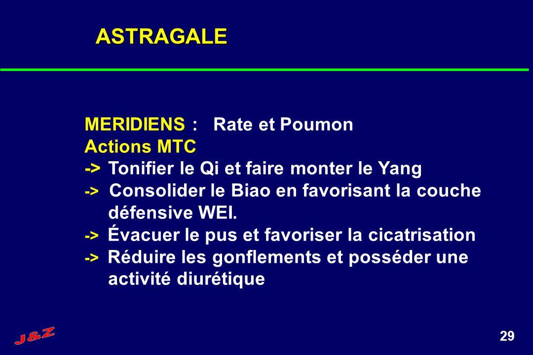 29 ASTRAGALE MERIDIENS : Rate et Poumon Actions MTC ->Tonifier le Qi et faire monter le Yang -> Consolider le Biao en favorisant la couche défensive W