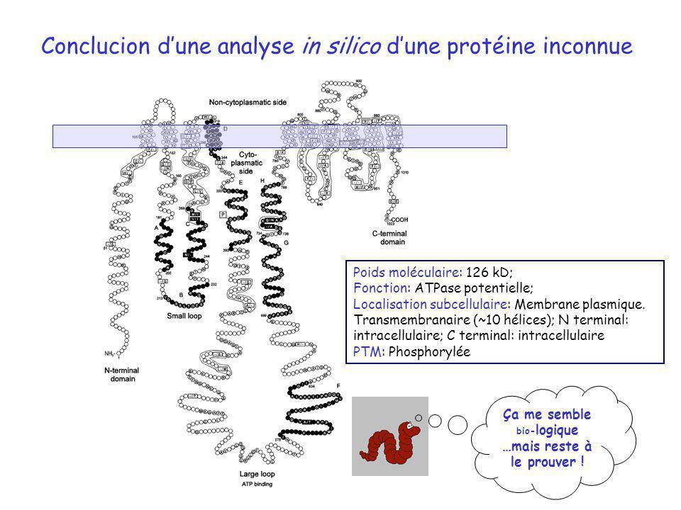 Conclucion dune analyse in silico dune protéine inconnue Poids moléculaire: 126 kD; Fonction: ATPase potentielle; Localisation subcellulaire: Membrane