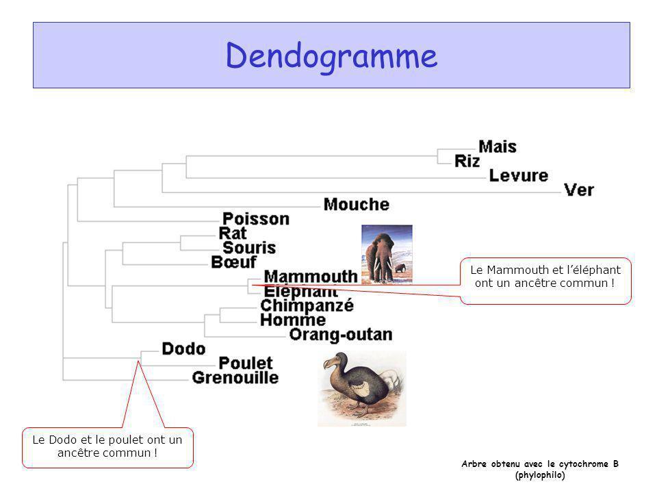 Exemple dun dendrogramme obtenu à partir dun résultat de CLUSTALW à laide du programme « phylodendron » Dendogramme Le Dodo et le poulet ont un ancêtr
