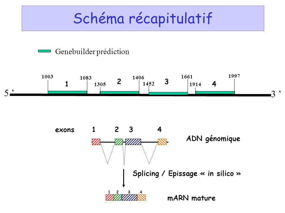 Schéma récapitulatif 3 5 Genebuilder prédiction EST => cDNA ADN génomique exons14 Splicing / Epissage « in silico » mARN mature 1234 23 1083 1003 1305