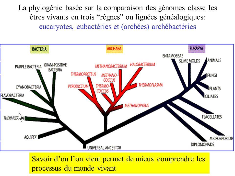 La phylogénie basée sur la comparaison des génomes classe les êtres vivants en trois règnes ou lignées généalogiques: eucaryotes, eubactéries et (arch
