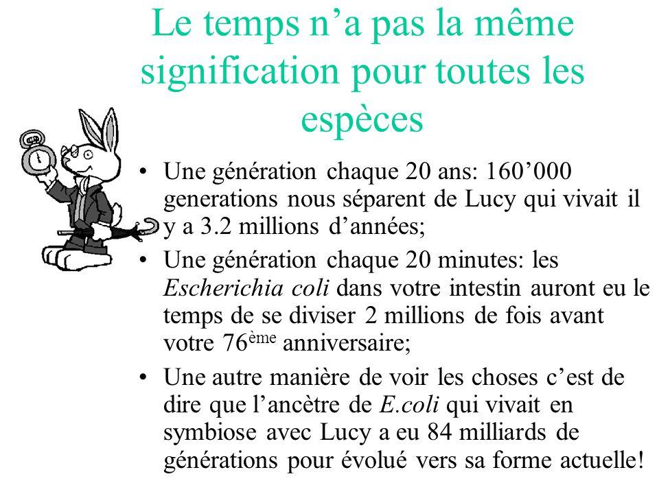 Le temps na pas la même signification pour toutes les espèces Une génération chaque 20 ans: 160000 generations nous séparent de Lucy qui vivait il y a