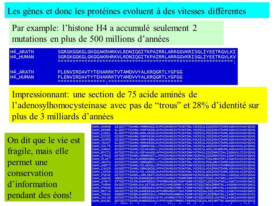 Les gènes et donc les protéines evoluent à des vitesses différentes Par example: lhistone H4 a accumulé seulement 2 mutations en plus de 500 millions