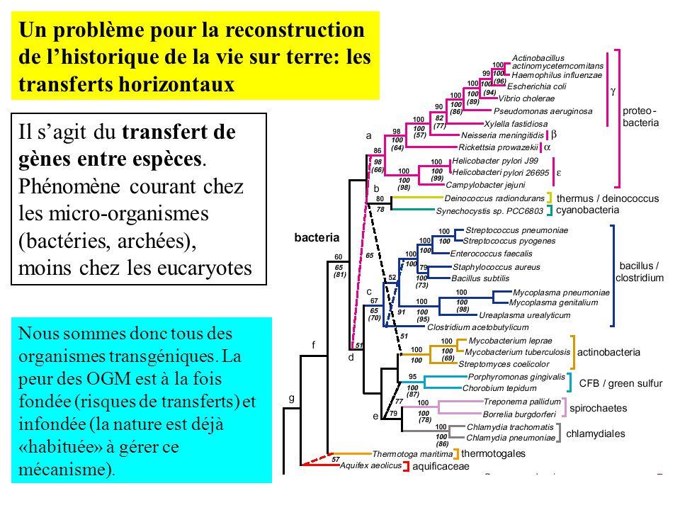 Un problème pour la reconstruction de lhistorique de la vie sur terre: les transferts horizontaux Il sagit du transfert de gènes entre espèces. Phénom