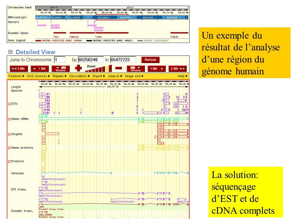 La solution: séquençage dEST et de cDNA complets Un exemple du résultat de lanalyse dune région du génome humain