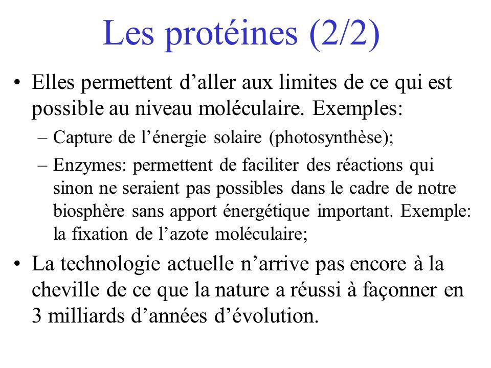 Les protéines (2/2) Elles permettent daller aux limites de ce qui est possible au niveau moléculaire. Exemples: –Capture de lénergie solaire (photosyn