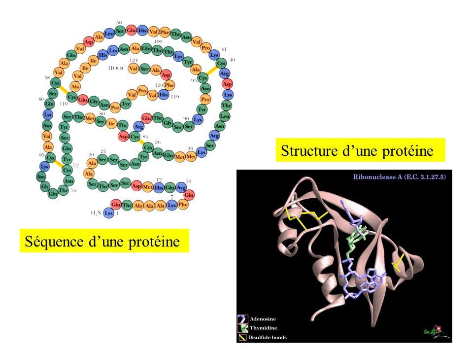 Séquence dune protéine Structure dune protéine