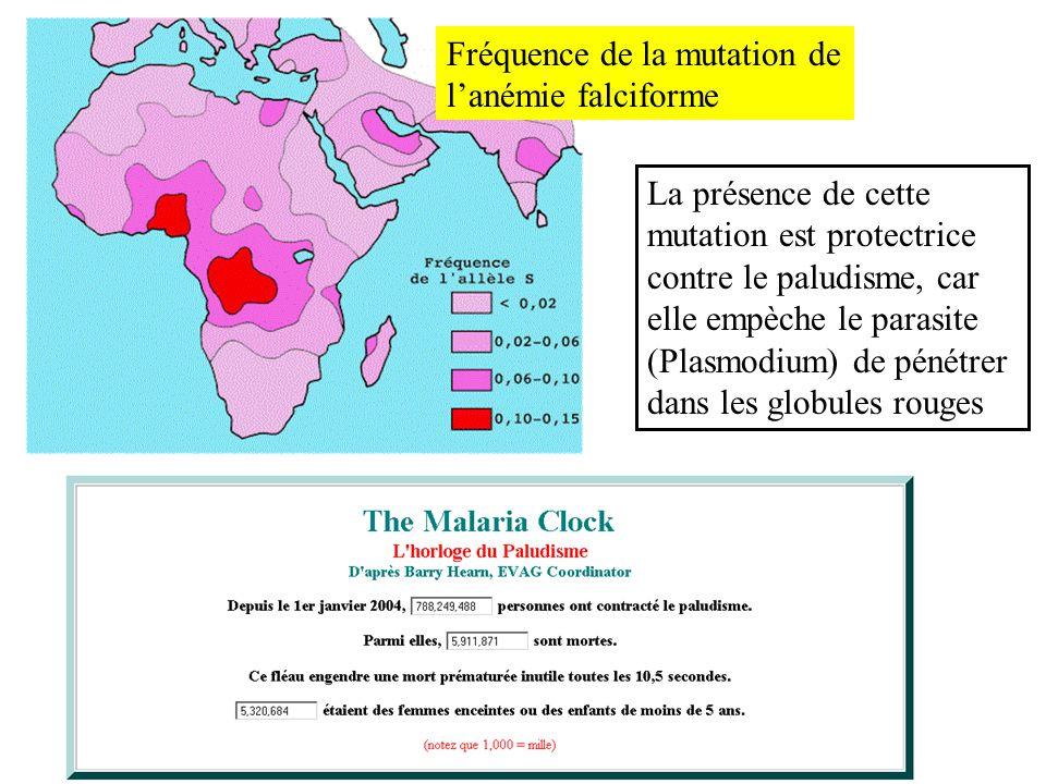 Fréquence de la mutation de lanémie falciforme La présence de cette mutation est protectrice contre le paludisme, car elle empèche le parasite (Plasmo