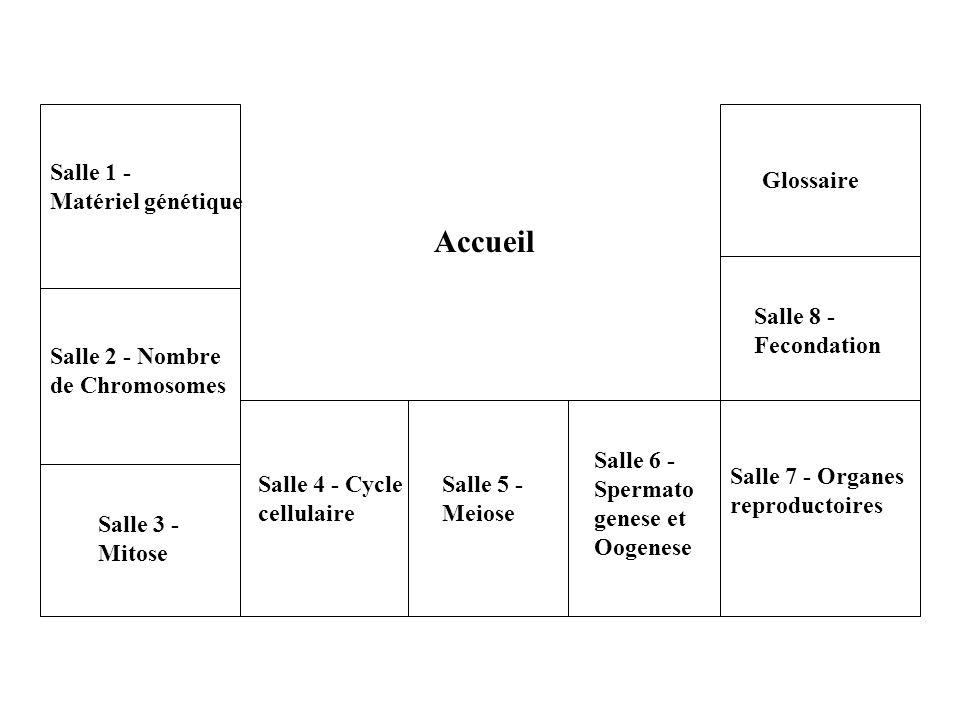Accueil Salle 2 - Nombre de Chromosomes Salle 1 - Matériel génétique Salle 3 - Mitose Salle 4 - Cycle cellulaire Salle 5 - Meiose Salle 6 - Spermato g